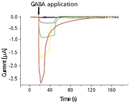 GABAA Receptors